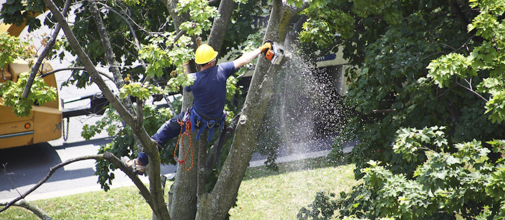Professional Tree Care